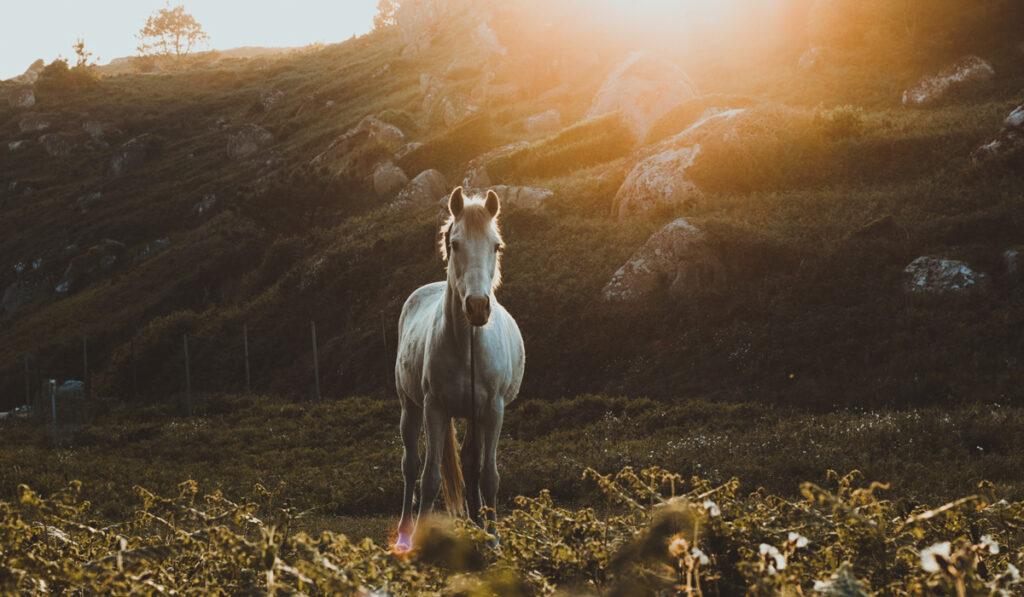 Häst i landskap i skymning.