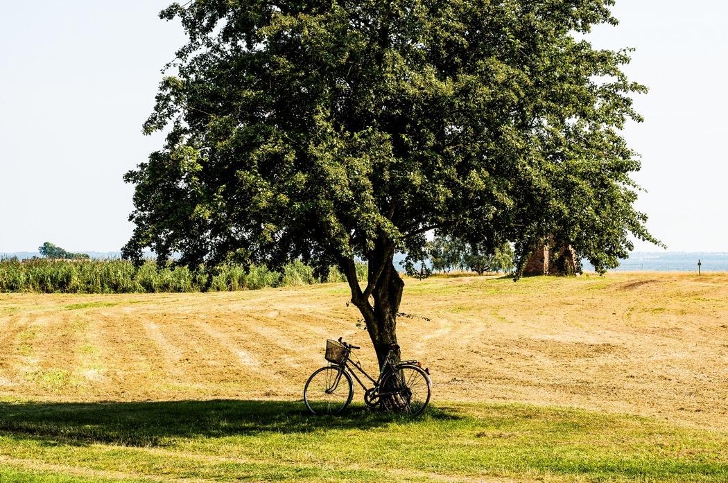 cykel lutad mot träd