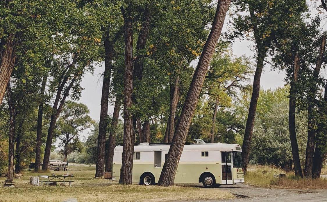 buss i skogen