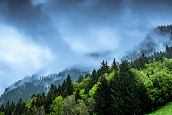 Skog och rök